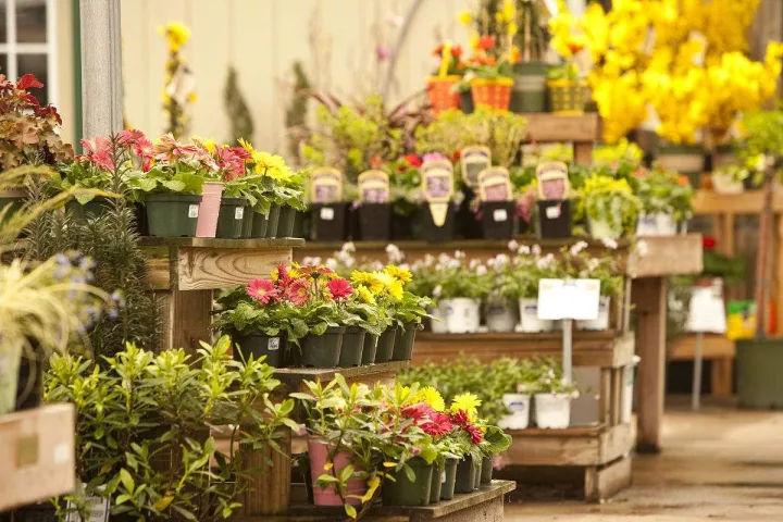 外部照明: 主要用于橱窗与门头,这两样是花店的名片与广告,直接决定图片
