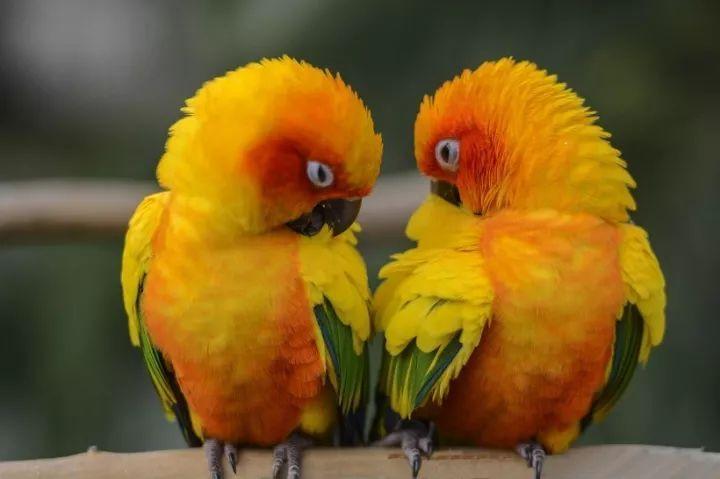 最贵是什么鹦鹉_最贵,最贵,最贵的相册,太美了,送给你!