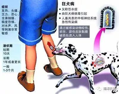 狂犬病图解-南海可免费接种狂犬病疫苗,错过可后补 时间地点在这里