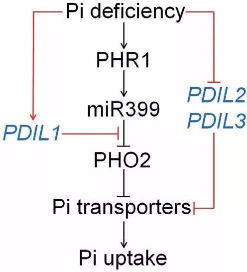 生物除磷的主要原理_生物书中的氮磷钾图片