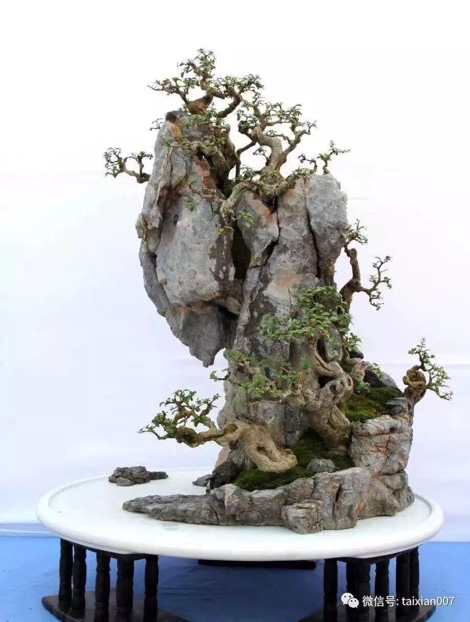捡一块石头,造一方天然盆景