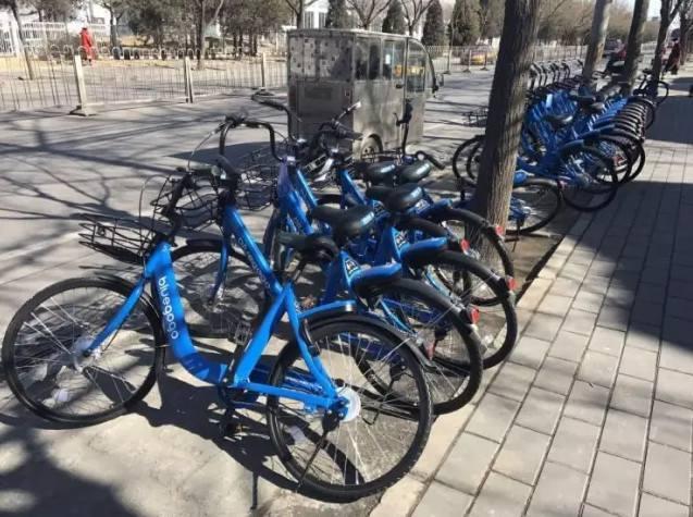 还原短命小蓝单车的365天:激进还是贪婪