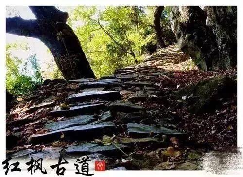 【浙江最美森林古道】磐安朱锡岭红枫古道入选浙江十大风情古道