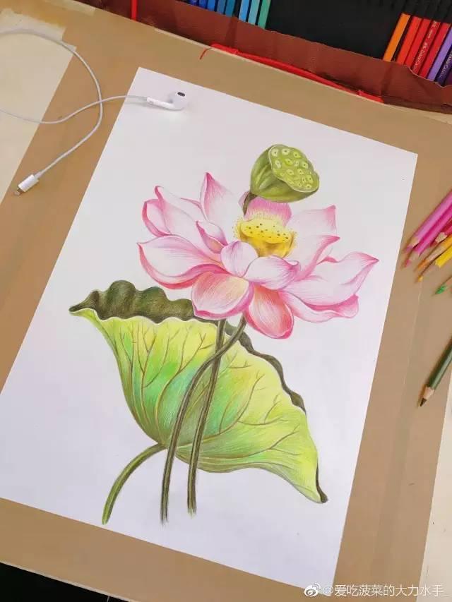 彩铅手绘荷花教程