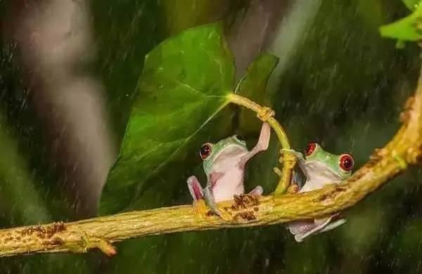 小动物们躲雨的方式,你肯定没见过 萌化了