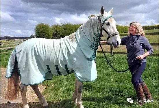 全球马界的奇闻趣事 一匹西班牙马儿竟然对草过