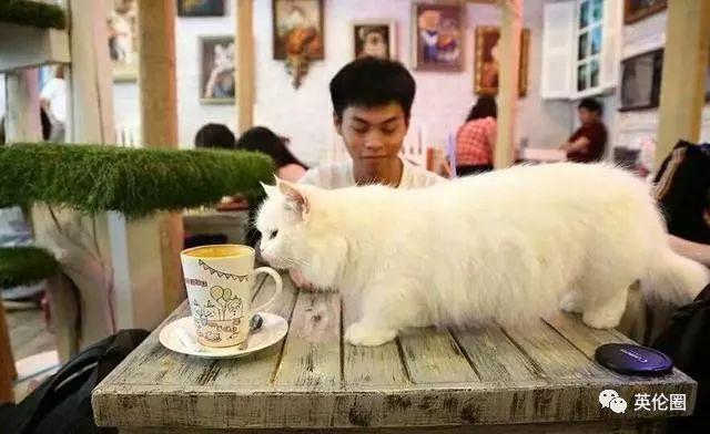 撸猫咖啡厅都太小清新了!英国人挤进地牢,和老鼠一起