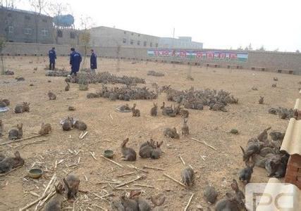 散养兔子窝建造图