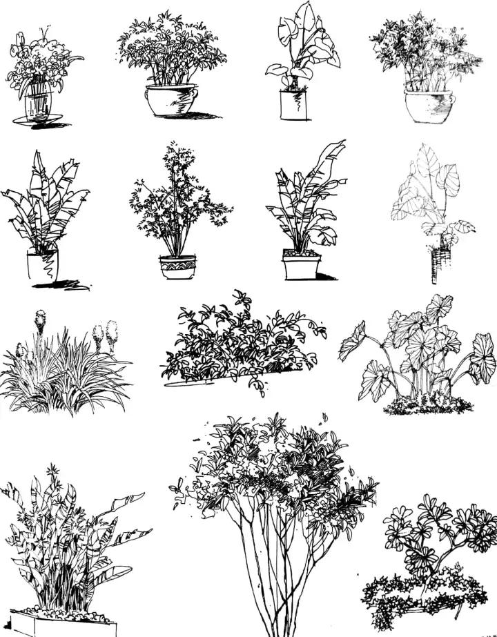 桂花花图片简笔画手绘