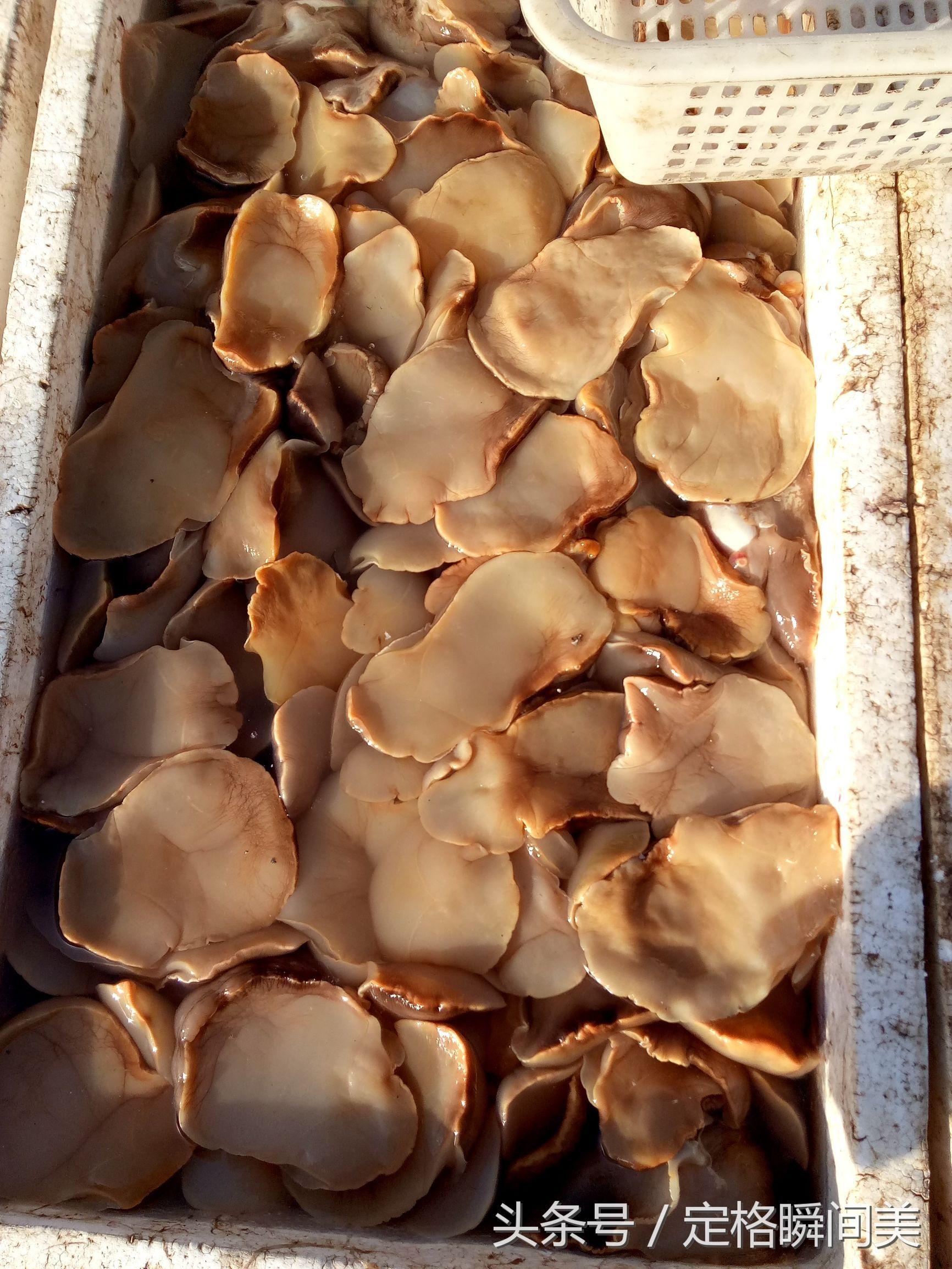 干了个大肥逼_大海螺,肉都出来了,很肥,一斤卖30元.