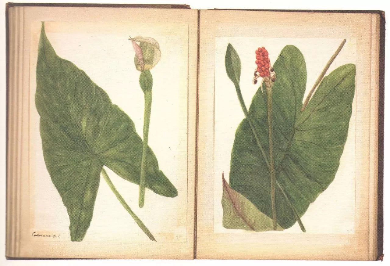 自然笔记:手绘植物速写 | 佳作推荐