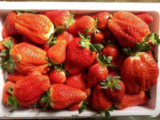 妻子从娘家带回了一箱又大又红的草莓,令我食指大动.