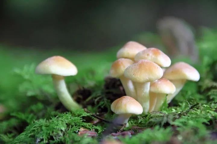 内裤会长蘑菇什么原理_树上会长蘑菇吗
