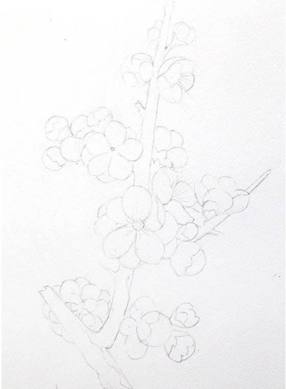 梅花-水彩手绘教程