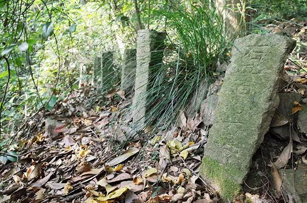 """西湖群山发现一片""""野冢坟"""",1000多个墓碑!他们是谁?"""
