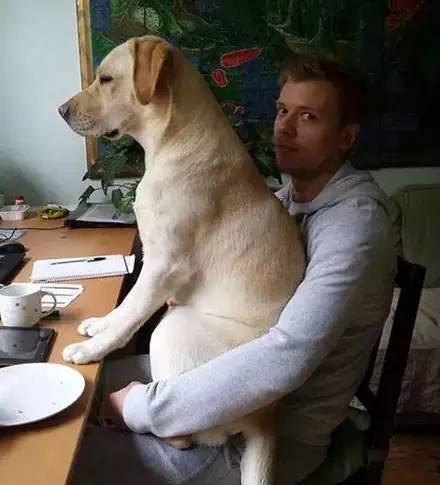 养的狗狗太粘人,是种怎样的体验? - yuhongbo555888 - yuhongbo555888的博客