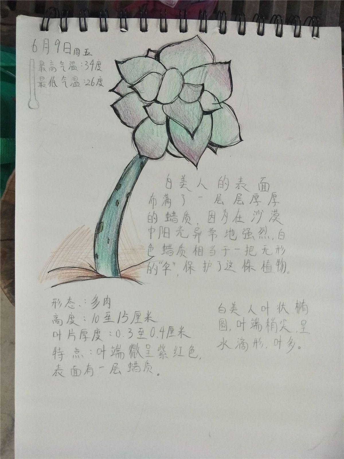 1  创意手工:  豆子拼贴画,叶脉书签,自然笔记,贺卡diy,树叶拼贴画图片