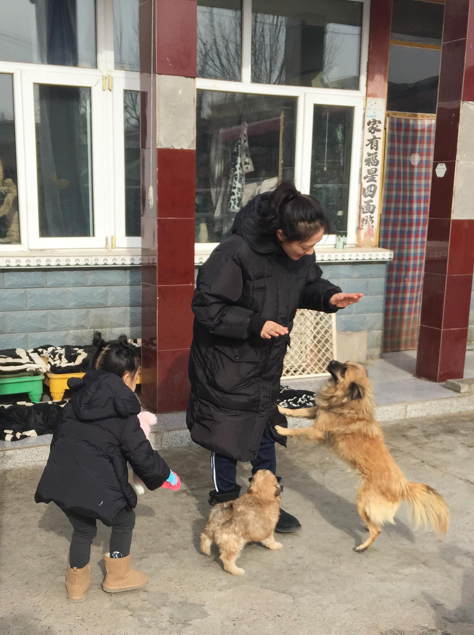 国内部分小动物救助机构联系方式_生命阳光_新浪博客