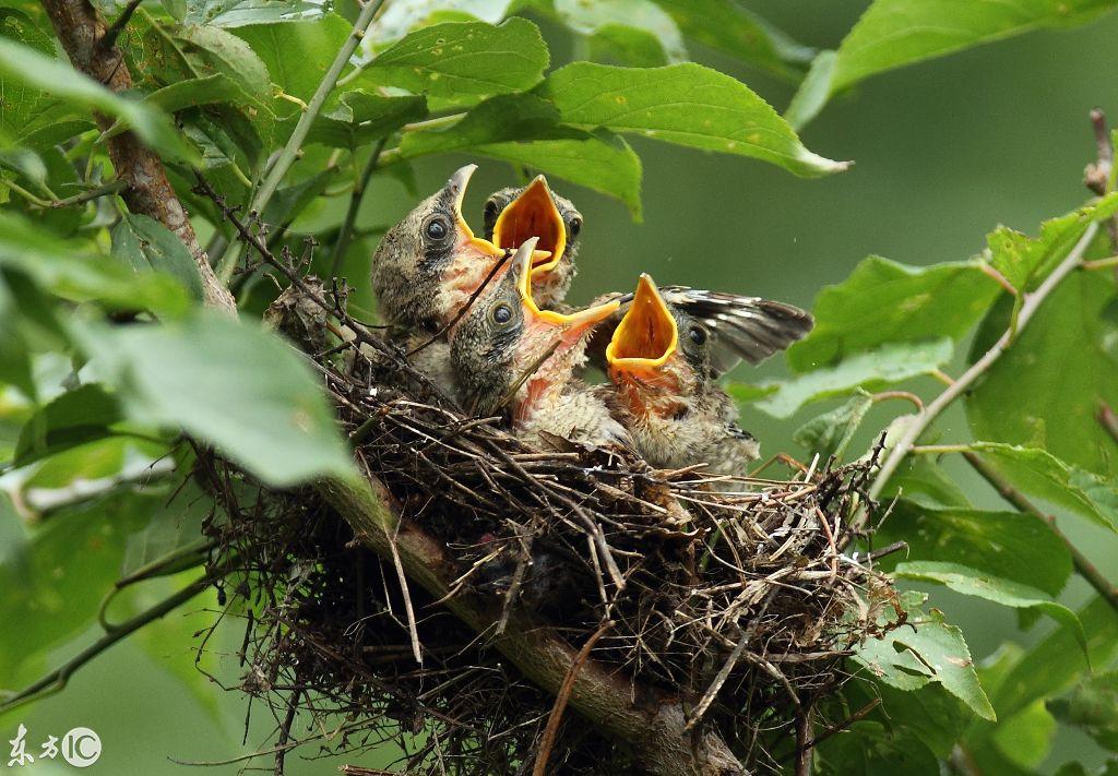 猎人食腐鸟宝宝_鸟宝宝_鸟妈妈给鸟宝宝讲故事