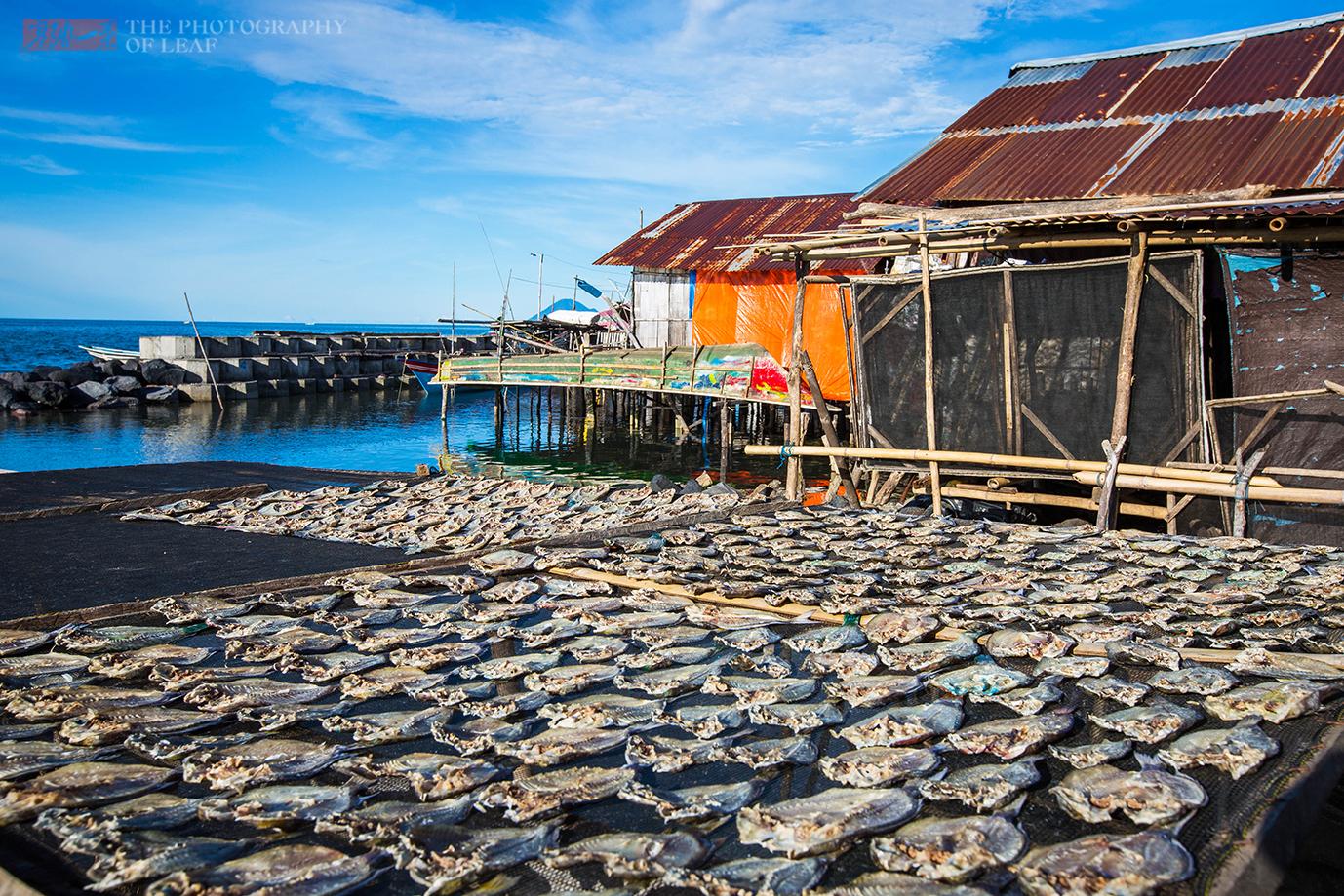 印尼农民一天收入50元,能养活一家人,运气好捕到这个鱼一夜暴富