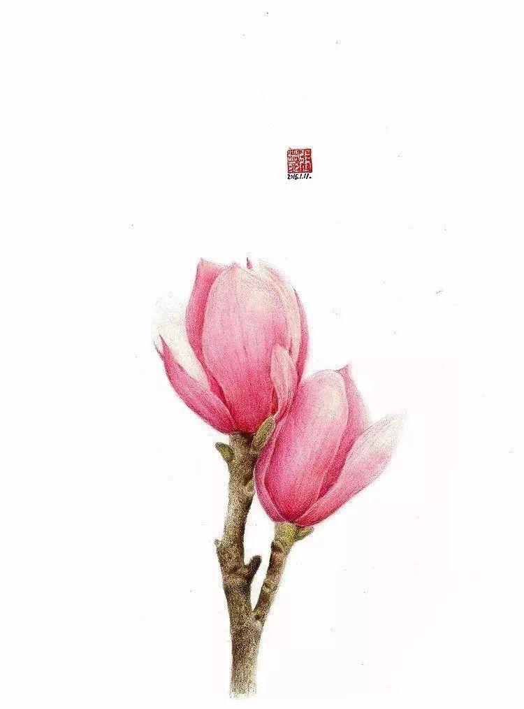 文化 正文  一首歌,一杯咖啡 一盒彩铅 一朵花卉 彩铅画色彩饱满,色调