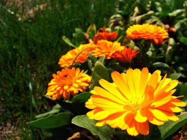 花草木栽培-15种花草树木种植技巧