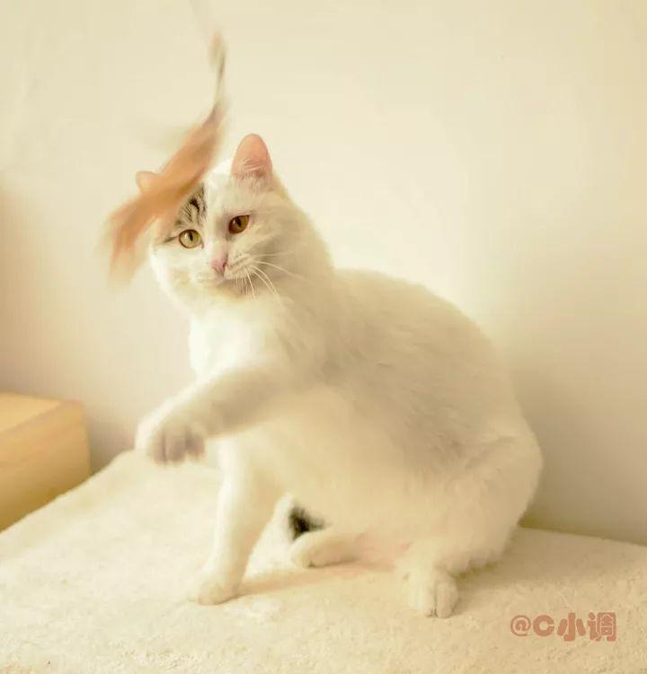 自制猫衣服图纸