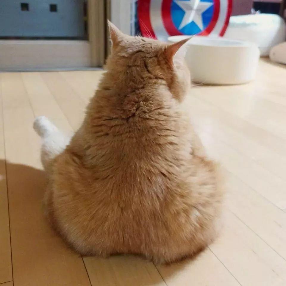 宠物 正文  网友家的橘猫有一个销魂的背影 看上去很美味的样子