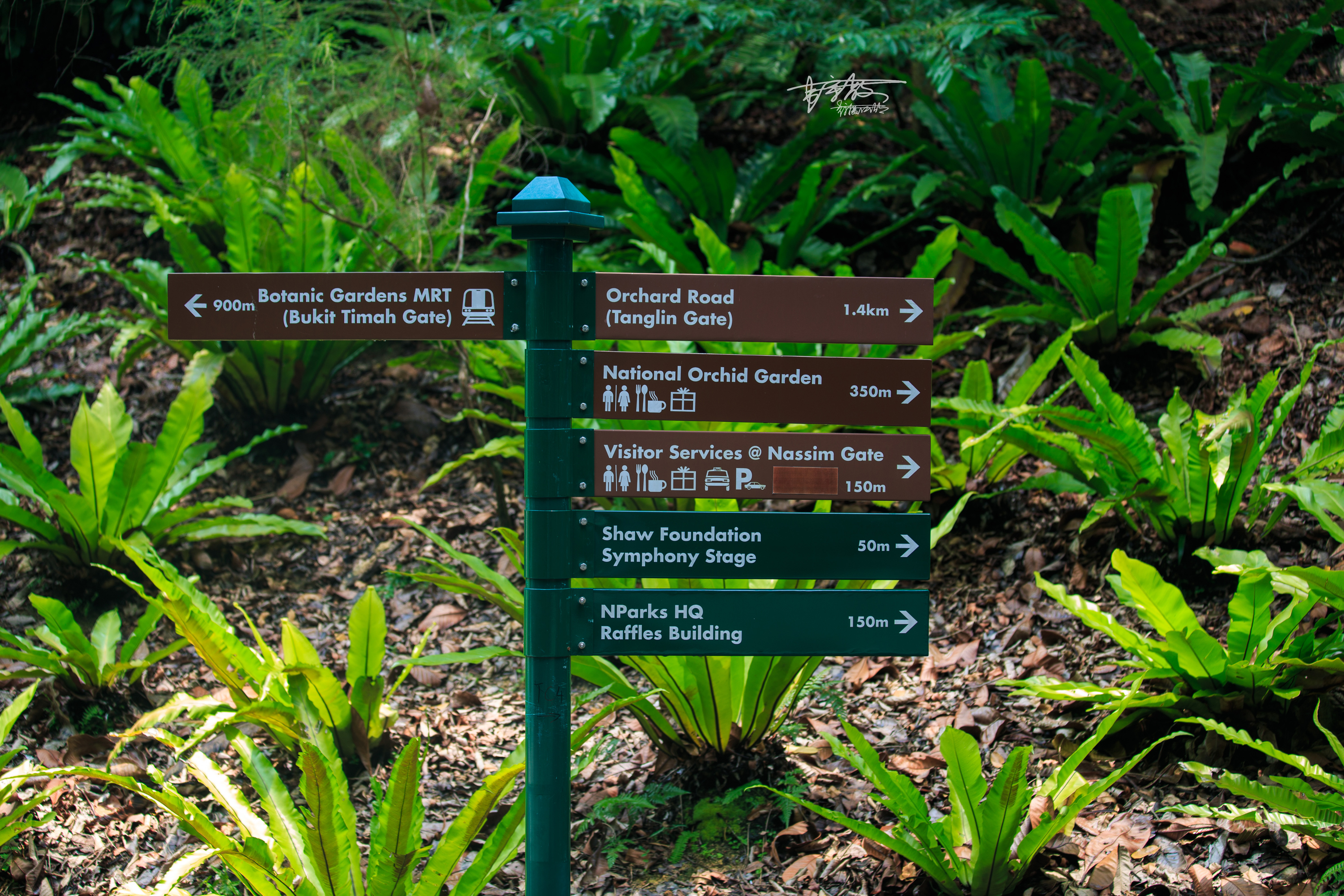 跨越158年历史,138个足球场大的热带花园