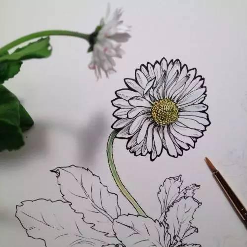 针管笔画植物手绘可以这么美!