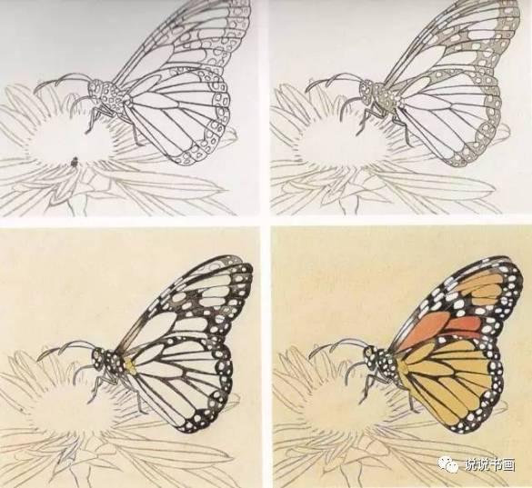 文化 正文  1 工笔画—— 蝴蝶  ——李晓明工笔虎斑蝶画法 1.