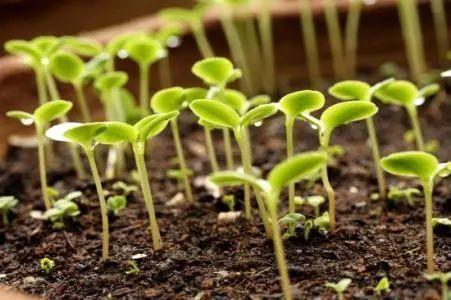 《种子发芽实验(一)》教学设计