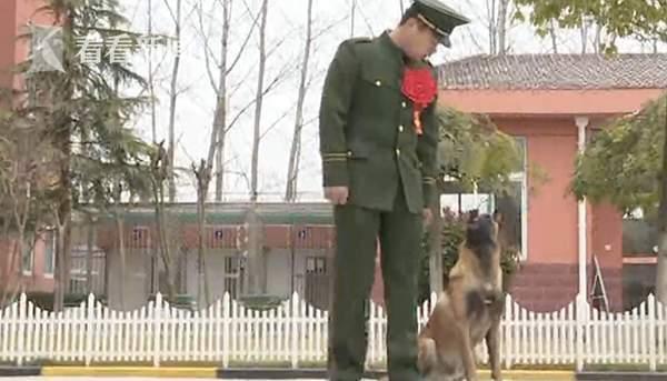 """巡逻时遇老兵退伍军犬竖前腿""""敬"""