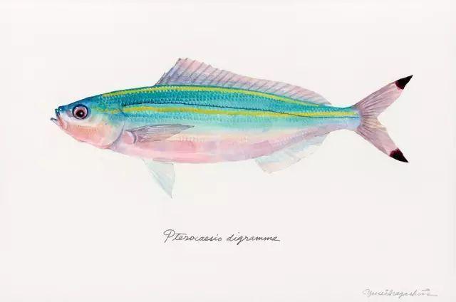 鱼之恋 绘画