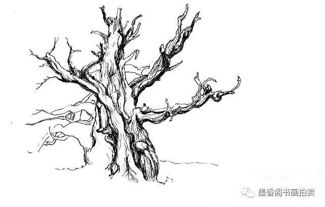 钢笔速写|树的画法