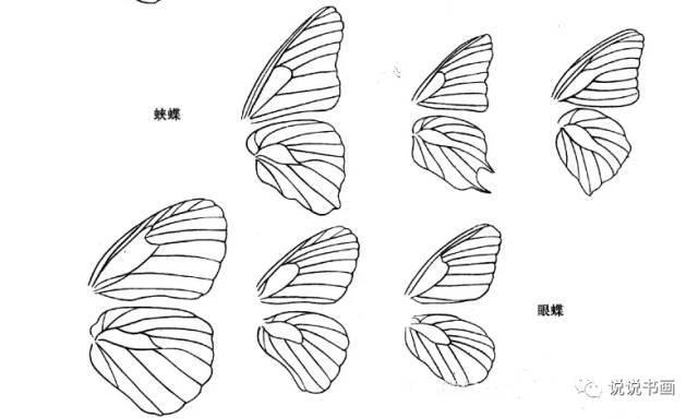 翅膀手绘图片简单画法