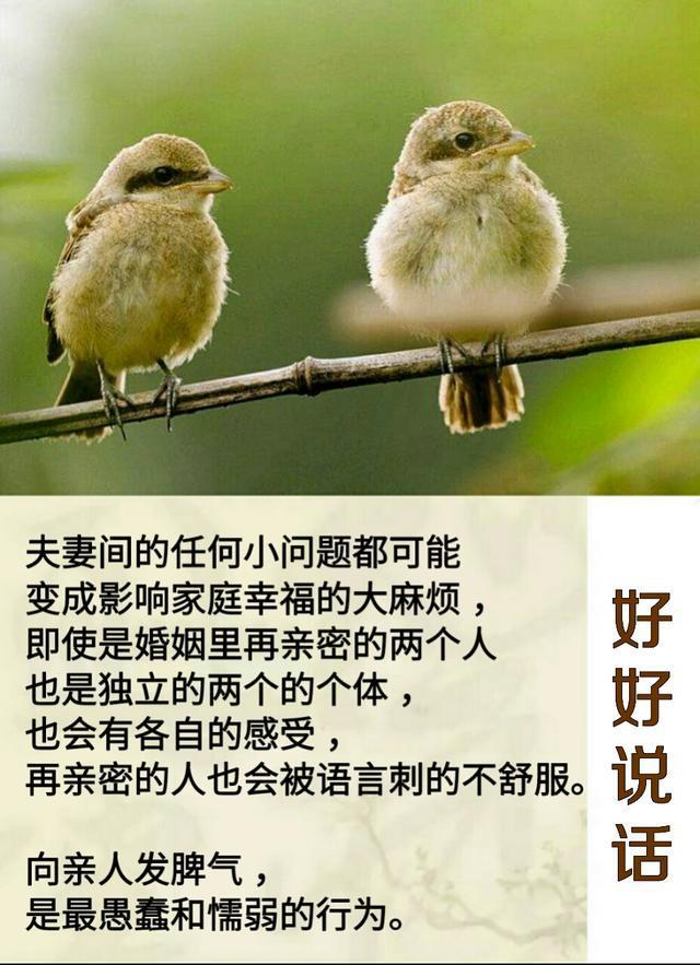 一家人的幸福,从好好说话开始「句句实在话」