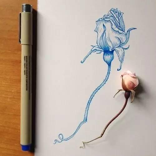 针管笔画植物手绘可以这么美