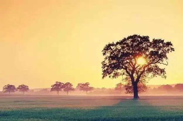【人生感悟】心是一块田,快乐自己种!