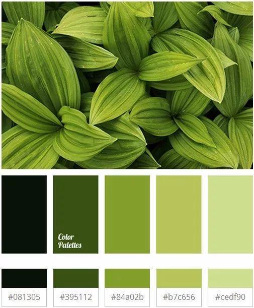 草木绿 | 2017年最美的流行配色.