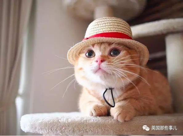 小猫背影简笔画教程