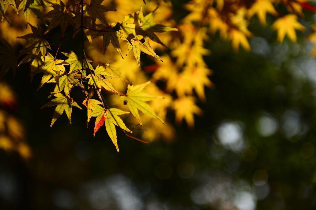 """这一次,南京栖霞山与苏州大学的秋季""""扫黄""""很成功!"""