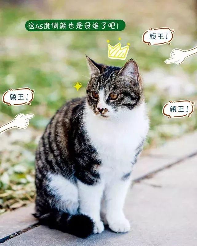 也有矜持端庄的猫小主, 即使是睡觉, 或者来个