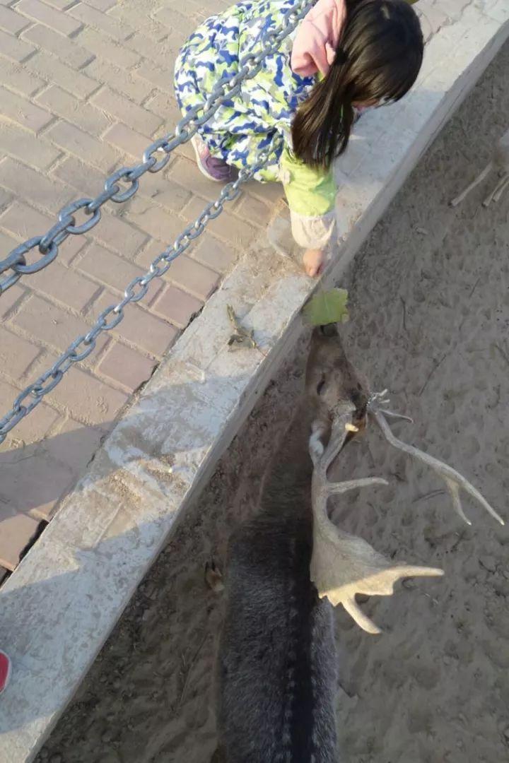 濮阳市东北庄野生动物园来了新动物