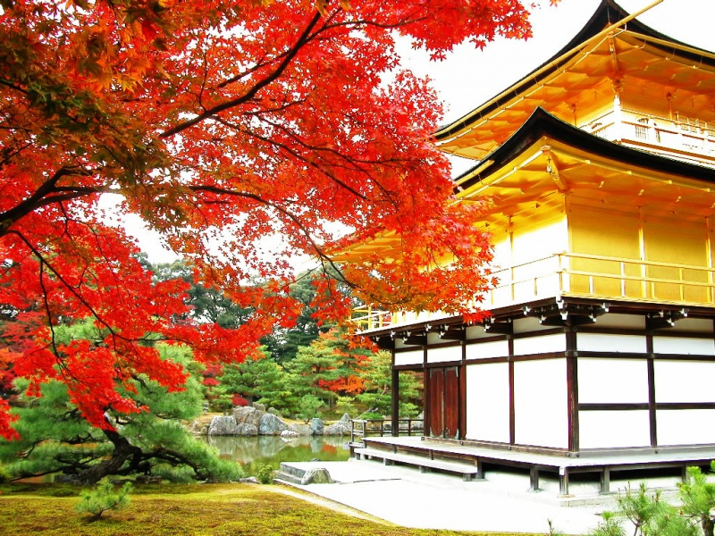 天了噜!以后去日本京都游玩,住宿要被收税了……