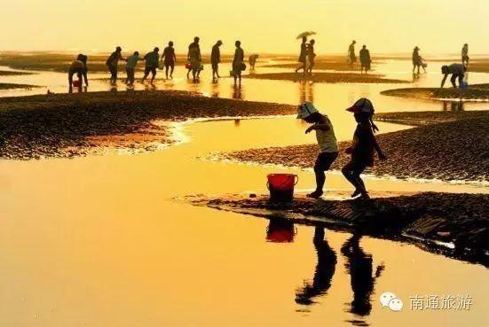 一只文蛤撑起了南通海鲜界的半边天!