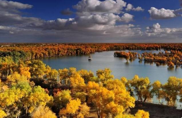 沿该路东南行沿途沙地中不时出现成簇,成片的胡林风景.图片