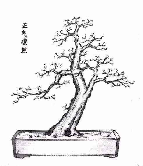 树桩盆景造型图谱大全