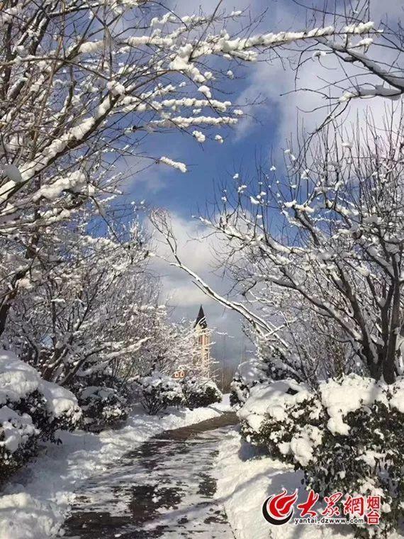 半小时积雪8厘米,这才是 雪窝 烟台的冬天 她已美成了一幅油画
