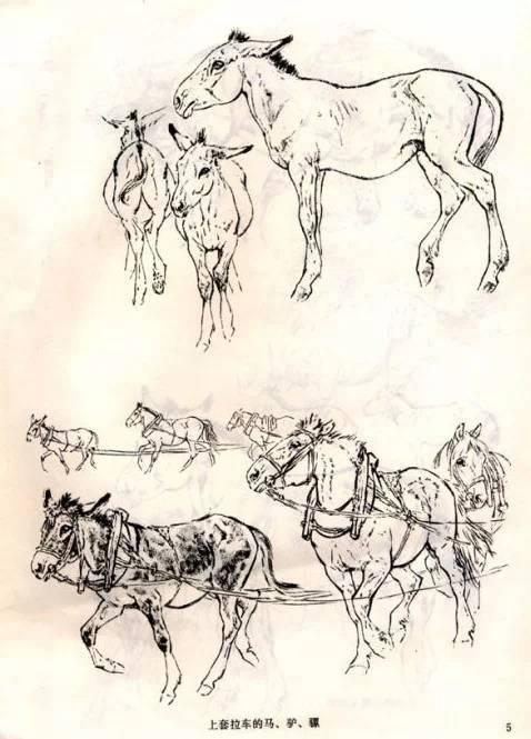 刘继卣画马技法与马的结构素描图片